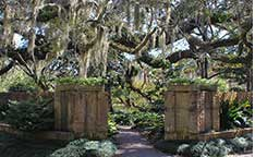 Old oaks/pathway in Brookgreen Gardens