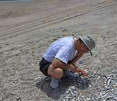 Wally May, 2014 collecting shells